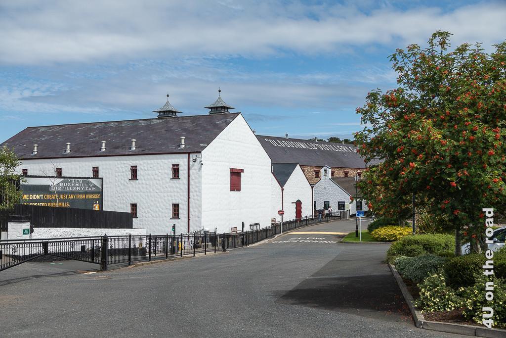 Bild Bushmills - Destillerie zeigt den gepflegten Häuserkomplex mit roten Fensterladen auf der linken Seite der Strasse. Rechts sind Ebereschen mit roten Beeren und Blumenunterpflanzung zu sehen.