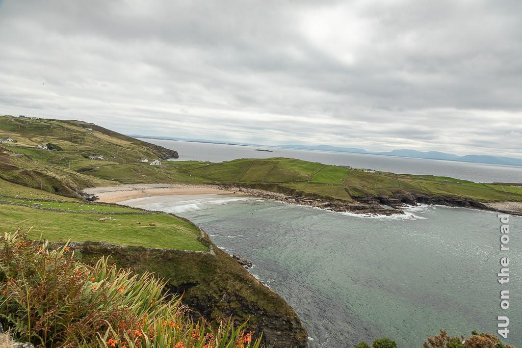 Bild Muckross Head - Blick auf den Strand zeigt Montbretien, die Felsküste und den Strand in der Bucht, wo die Landzunge abgeht. In der Bucht brechen sich die Wellen ordentlich.