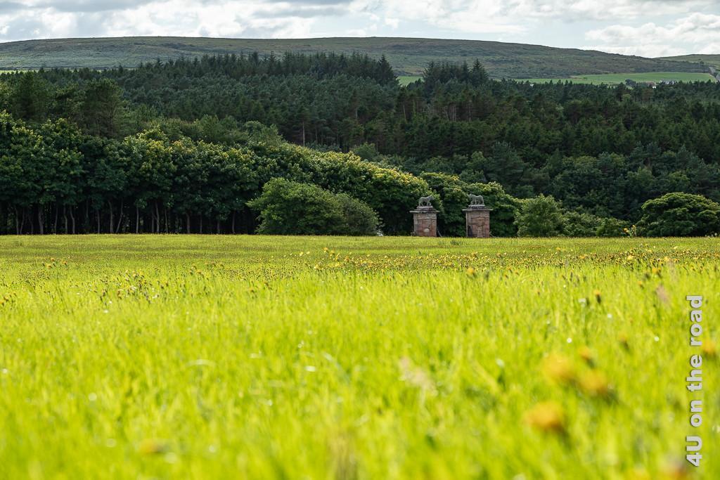 Bild Lions Gate aus der Ferne zeigt im Vordergrund hohes Gras mit Löwenzahn, das letzte Drittel der gemauerten Pfosten der Toreinfahrt mit den Löwen oben drauf, dahinter dunkler Wald, Hügel und Himmel