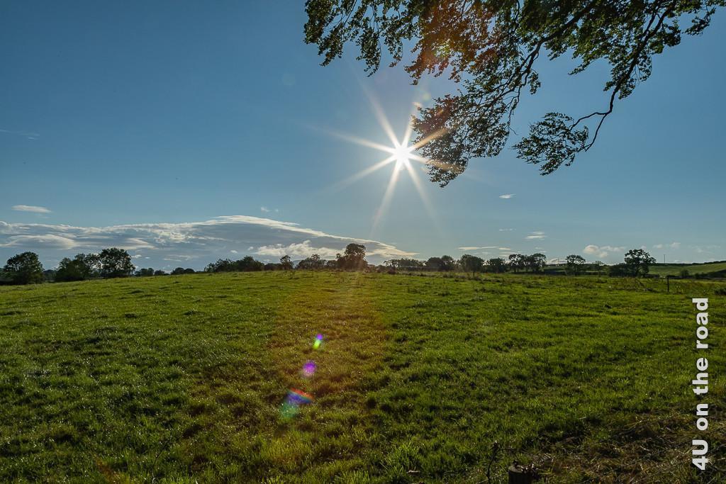Bild Sommermorgen bei den Dark Hedges zeigt die strahlende Sonne (sternförmig) über einer grünen Weide, die im Hintergrund von Bäumen begrenzt wird.