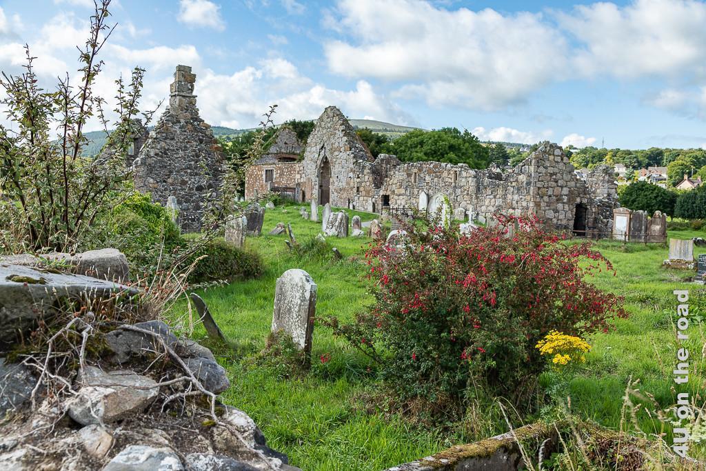 Bild Bonamargery Friary zeigt die Ruinen der Kirche und windschiefen Grabsteine. Im Vordergrund steht eine grosse Fuchsie und gelbe Margeriten