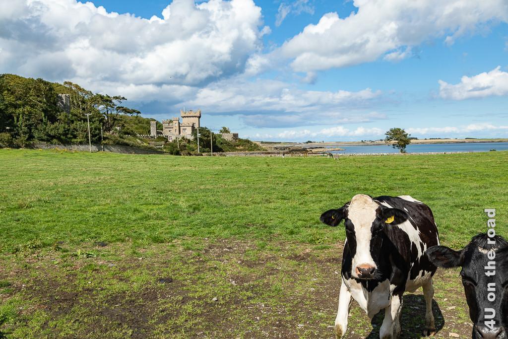 Bild Das ist mal ein Häuschen, Ards Peninsula zeigt im Hintergrund ein Haus mit Zinnen und Türmen. Im Vordergrund ist eine Weide mit zwei Kühen, die sich am Rand ins Bild drängen zu sehen. Haus und Weide schliessen an eine Meeresbucht an.