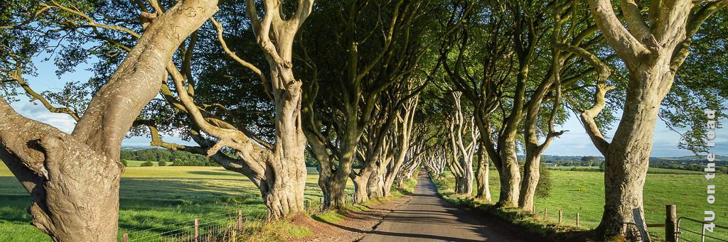 Bild Dark Hedges zeigt die Strasse, die sich am Ende wie ein Tunnel verengt, eingerahmt von den Buchenbäumen