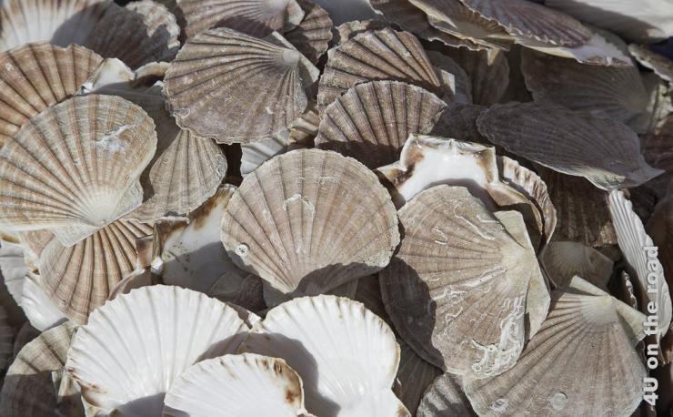 Dieses Bild zeigt einen Haufen leerer Shell Muscheln.