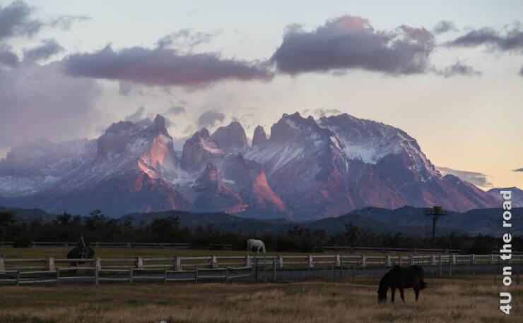 Bild zeigt das Gebirgsmassiv in zarten Rosatönen vom Sonnenaufgang. Im Vordergrund sind Pferde auf der Koppel zu sehen.