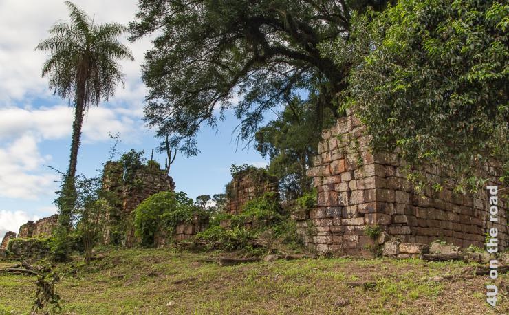 Bild zeigt alte überwachsene Mauern der Mission St. Ana. Eine Palme sticht markant ins Auge.