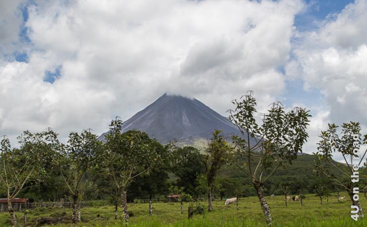 Bild zeigt den Vulkan el Arenal, dessen oberste Spitze von einer Wolke verdeckt ist. Es sieht so aus, als würde er rauchen. Im Vordergrund ist eine Rinderweide und Obstbäume.