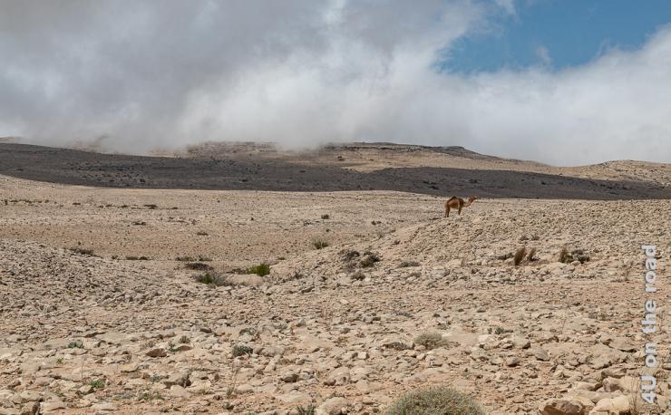 Das Bild zeigt die felsige, karge Landschaft auf dem Weg zum Jebel Samhan. Wolken ziehen durch und ein einsames Kamel steht in der Landschaft.