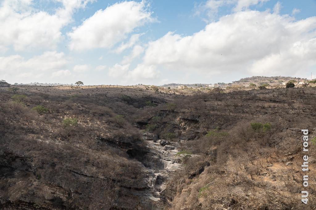 Bild Wadi, welches sich ins Sinkhole ergiesst zeigt Felsen, in die sich ein Fluss seinen Weg gegraben hat. Alles ist ausgetrocknet, auch die vielen Bäume, die auf dem felsigen Untergrund wachsen.