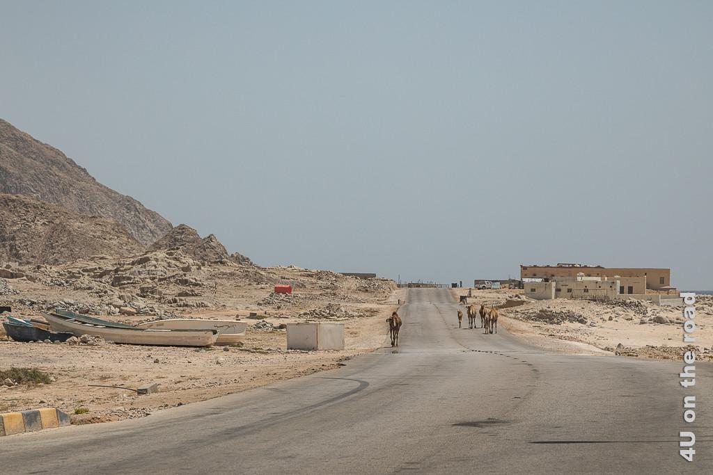 Bild ein weiterer kleiner Ort zeigt ein paar Häuser auf dem schmalen Streifen zwischen Meer und Felsen. Auf der Strasse trotten Kamele entlang, Boote liegen auf dem Trockenen.