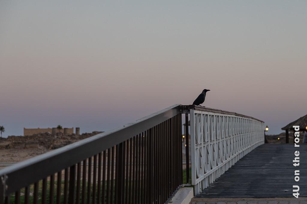 Bild Abendstimmung zeigt eine Brücke mit Krähe nach Sonnenuntergang im letzten Licht des Tages. Die Laternen leuchten schon.