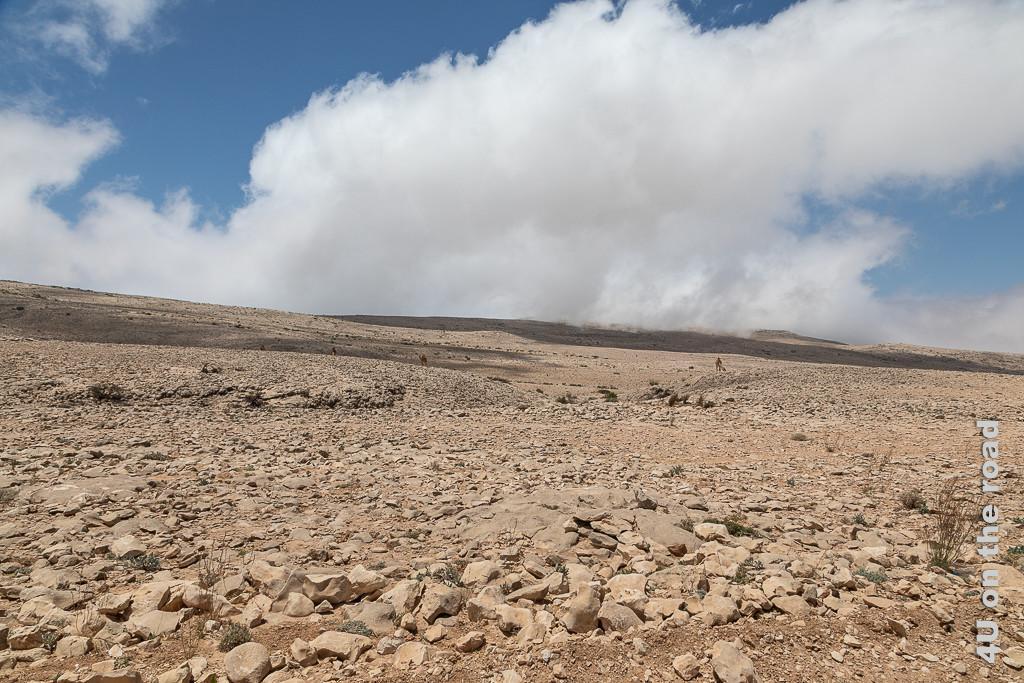 Bild Einsame Landschaft unterhalb des Jebel Samhan zeigt die felsige Landschaft. Eine grosse weisse Wolke steht am blauen Himmel. Ganz in der Ferne steht ein Kamel.