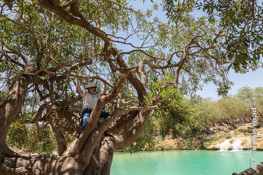 Bild Kletterkind zeigt Gwendolyn, die einen der Bäume am Wadi Darbat bestiegen und es sich dort im Schatten bequem gemacht hat.