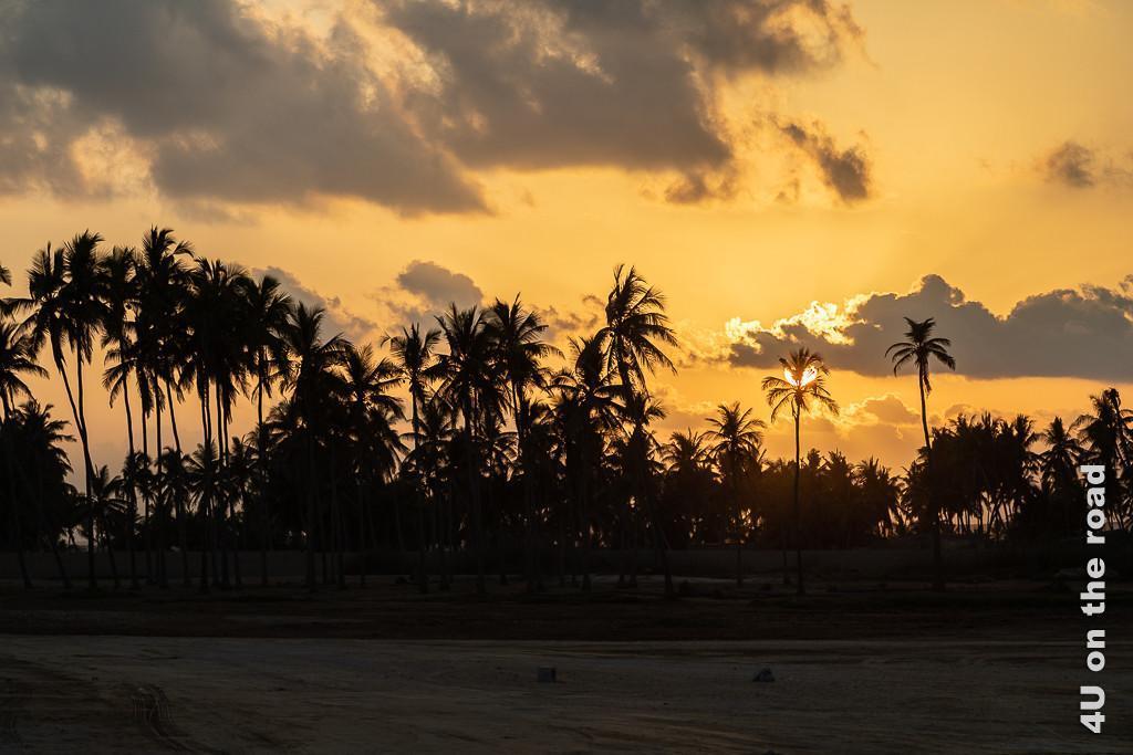 Bild Palmen im Sonnenuntergang in Taqa zeigt die Umrisse der Palmen vor orangem Hintergrund.