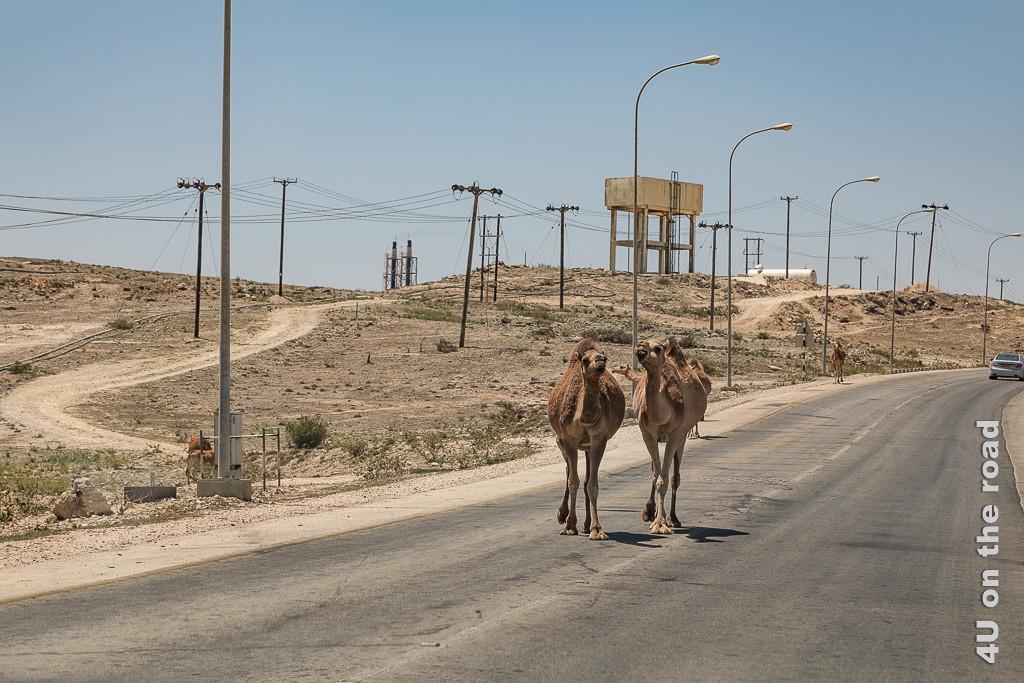 Bild Selbst hier beleuchten Strassenlaternen abends die Strassen zeigt eine Strasse auf der im Vordergrund zwei sich scheinbar unterhaltene Kamele entlangschlendern. Die Strasse wird von Strassenlaternen und Strommasten gesäumt. Im Hintergrund steht ein Wasserturm