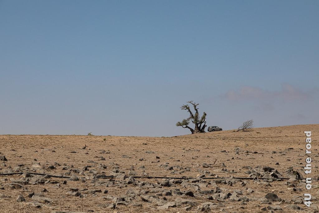 Bild Warten auf den Monsun, Oman zeigt die ausgetrocknete, felsige Landschaft mit einem markanten Baum und einem parkenden Auto