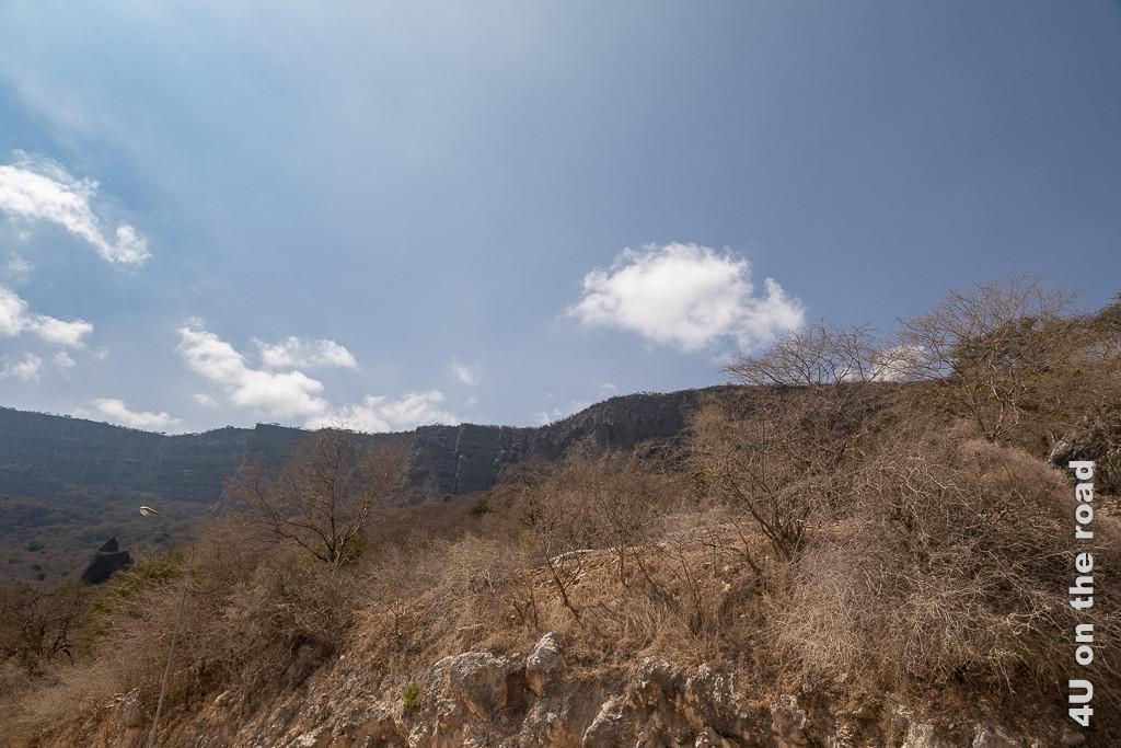 Bild Abfahrt nach Dhalkut, Oman - Blick zurück zeigt die steilen Küstenklippen im Hintergrund. Im Vordergrund sieht man jede Menge blattloser Bäume und Büsche.