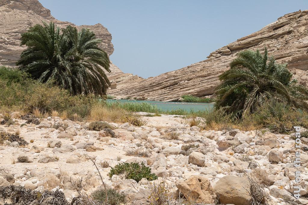 Bild Blick aus der Nähe auf die Oase zeigt das Ufer des Sees, die schräg aufragenden Felsen am anderen Ufer und Palmen.