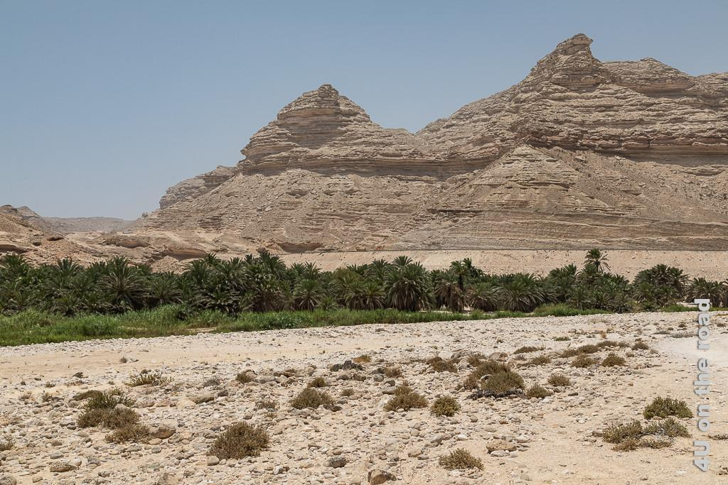 Bild Blick Richtung Strasse zeigt das steinige Ufer des Wadis, einen schmalen Streifen Grün mit vielen Palmen. Dahinter ragen verwitterte Felsen mit Spitzen heraus, an deren Fuss die Strasse entlang läuft.