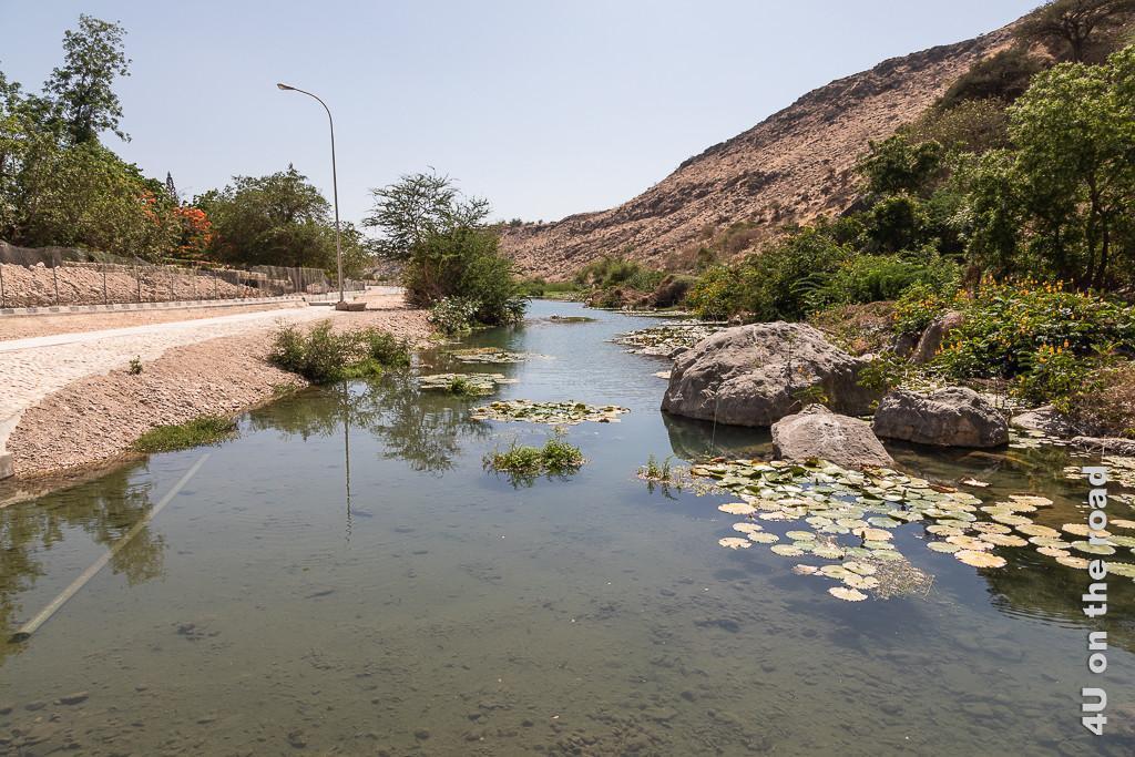 Bild Ain Razat Fluss mit Seerosenblättern zeigt von links nach rechts den Park, die Strasse und den Fluss, dessen Ufer grün bewachsen ist.