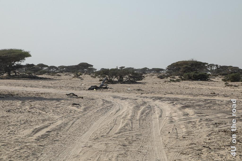 Bild Wir müssen die Sandpiste verlassen und folgen nun diesen Fahrspuren zeigt Fahrspuren durch festeren und weicheren Sand mitten ins Nirgendwo.