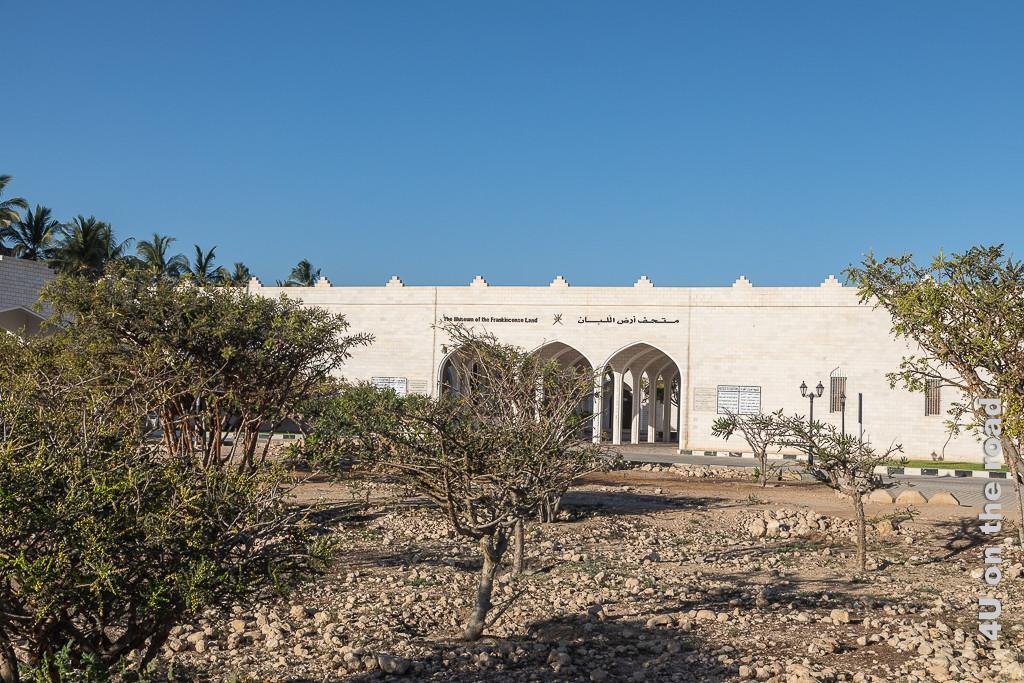 Bild Weihrauchbäume vor dem Museum of Frankincense Land im Al Baleed Archäologiepark zeigt das weisse Gebäude des Museums und einige Weihrauchbäume