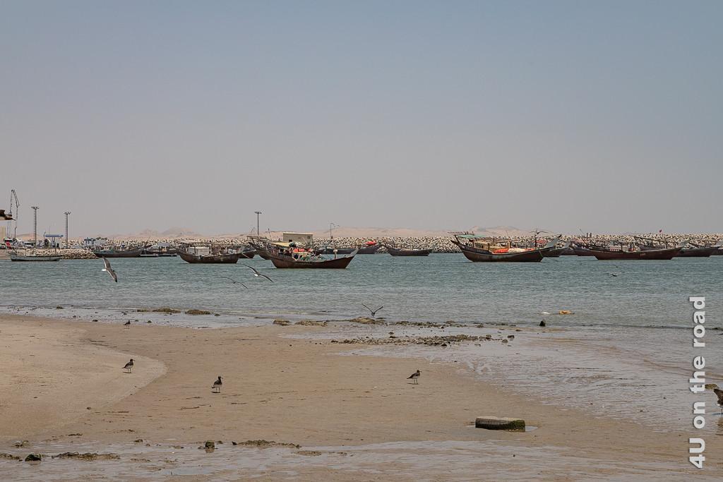 Bild Hafen von Al Ashkharah - Schiffe zeigt lauter ankernde Dhaus. Möwen fliegen durch das Bild.