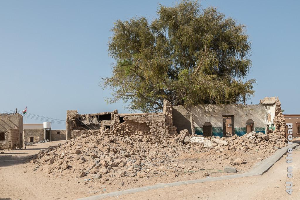Ras al Hadd - die alten Häuser verfallen. Bild zeigt Ruinen von Lehmbauten und einen grossen der Baum, der Schatten spendet.
