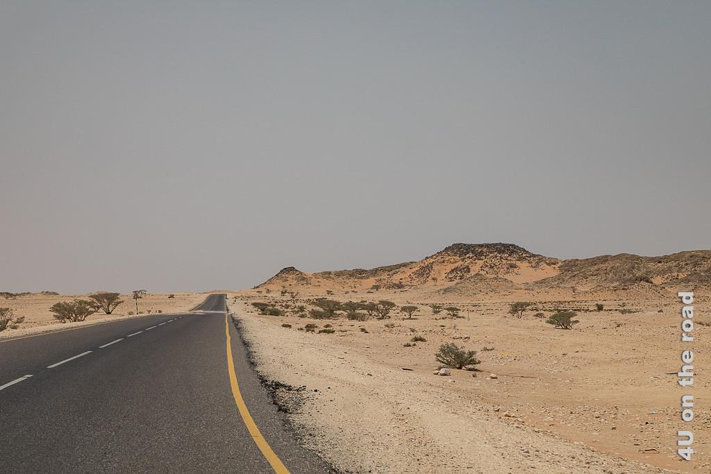 Bild Dünen neben der Strasse zeigt Büsche und teilweise bewachsene Dünen, die sich neben der Strasse auftürmen