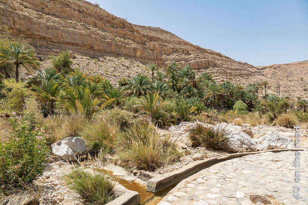 Wadi Bani Khalid - Falaj System zeigt den gefassten Wassergraben in den aus der palmen- und grasbewachsenen Umgebung Wasser fliesst.