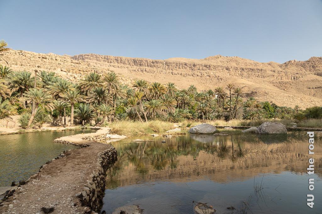 Wadi Bani Khalid - Blick auf den Palmenhain mit kleinen Staudammwegen auf die andere Seite des hier flachen Wassers. Gräser und Felsen bieten ein Paradies für Insekten.
