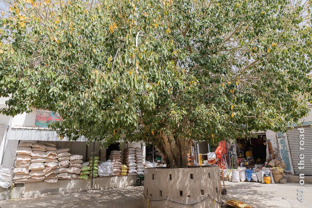 Alter Baum im Souk, der Menschen, die darunter verweilen, in Tiere verwandelt. Der Baum steht in der Mitte von Läden, in denen Baumaterial verkauft wird.