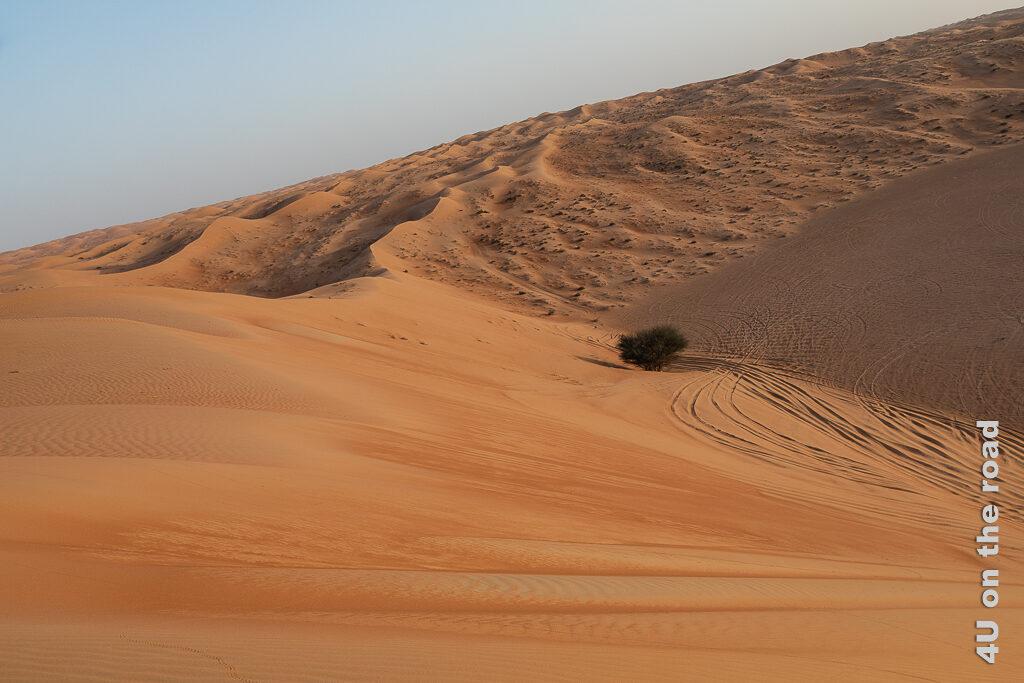Mit dem Auto über die Dünen zeigt die Fahrspuren im Sand. Am Fuss einer hohen Düne steht ein Baum.