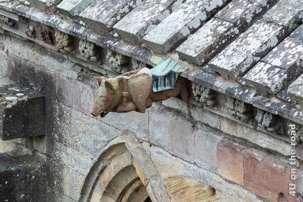 Melrose Abbey - dudelsackspielendes Schwein - Wasserspeier Kloster Melrose. Das Schwein hat den Dudelsack unter dem Bauch.