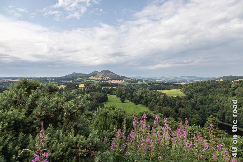 Scotts View - zeigt eine wunderschöne Aussicht auf das Hügelig Land Schottlands mit Feldern, Wäldern, Wiesen und See. Im Vordergrund rosa Nelken.
