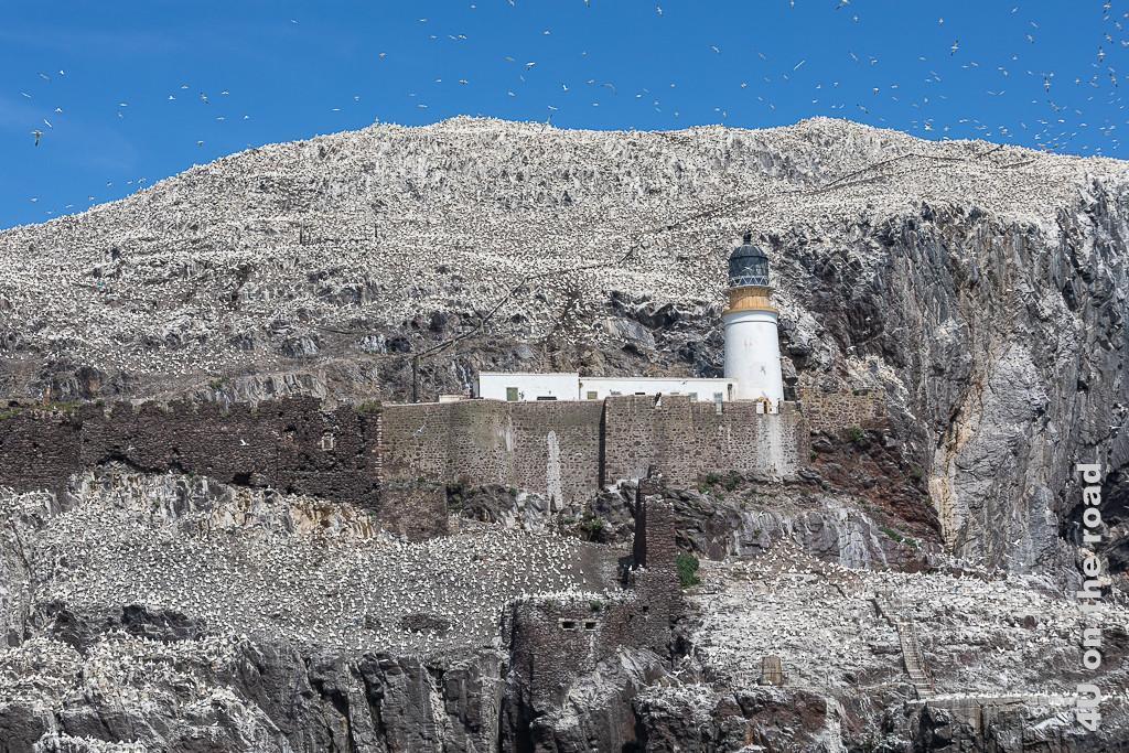 Leuchtturm und alte Festung auf dem Bass Rock. Der ganze Felsen ist von Vögeln bedeckt.