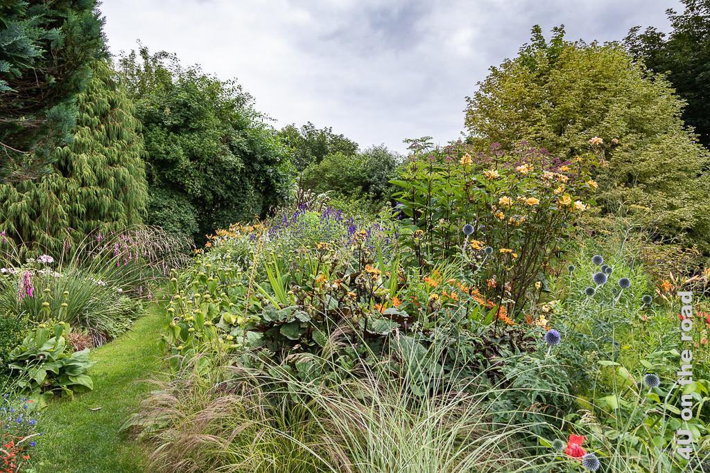 Blumenfülle im privaten Garten in Culross - gelbe Rosen, Monbretien, blaue Kugeldiesteln, Gräser, orange Lilien und viele unbekannte Blumen