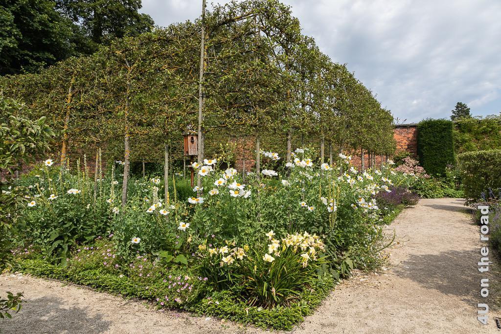 Formaler Garten - langstämmige Spalierobsthecke und Vogelhaus in den Alnwick Gardens