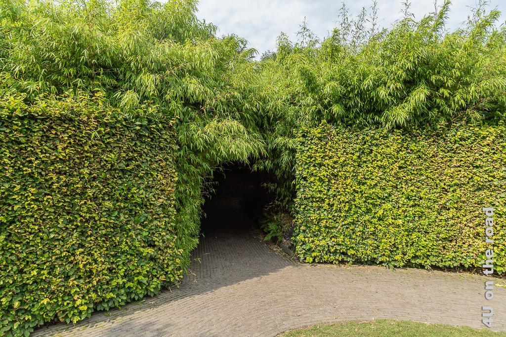 Alnwick Gardens - Eingang zum Bambuslabyrinth. Eine Buchhecke begrenzt den Bambus nach aussen.