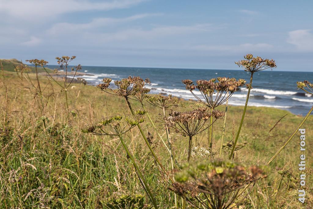 Kilminning Coastal Wildlife Reserve an der Küste der Region Fife