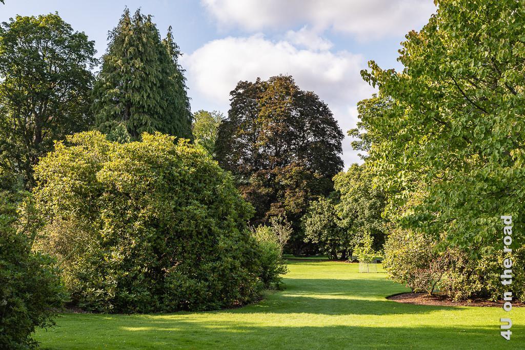 Scone Palace Park - im Bild grosse Bäume unterschiedlicher Wuchsform und Höhe dazwischen Rasenflächen