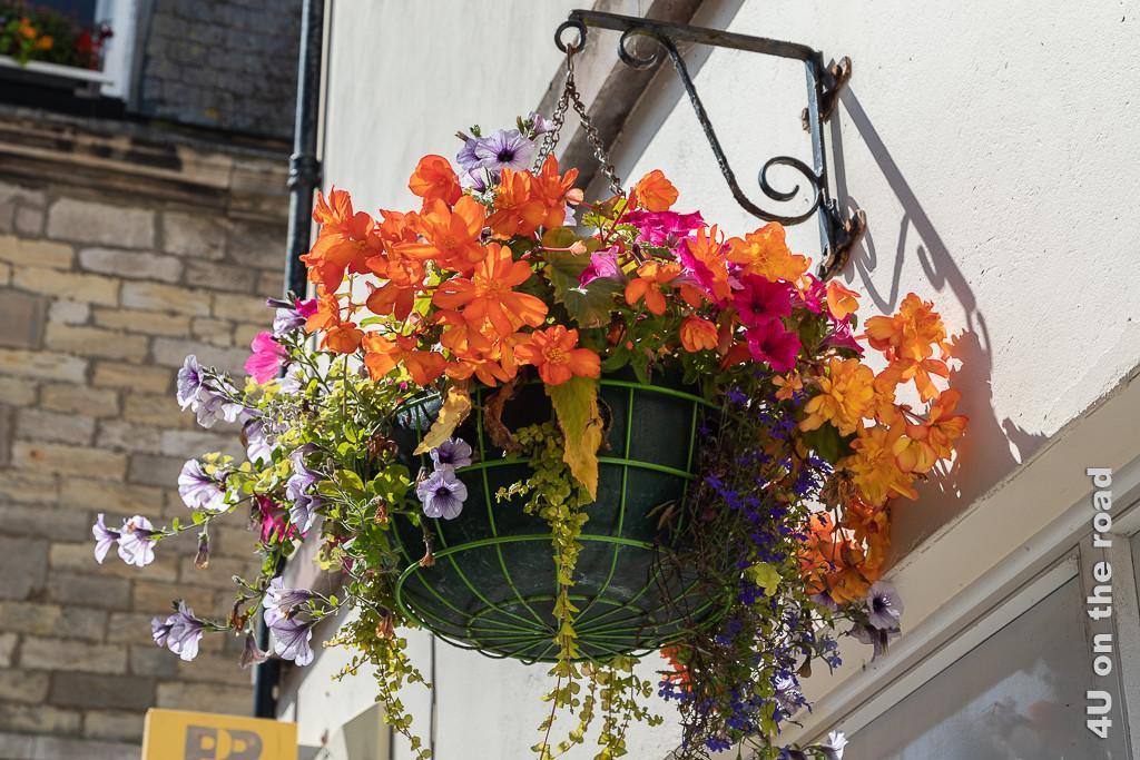 Fröhliche Blumenkörbe sind nicht nur in Anstruther überall im Strassenbild zu sehen. Im Bild orange Begonien kombiniert mit pinken und weiss-violetten Petunien und dunkel blauem Elfenspiegel.