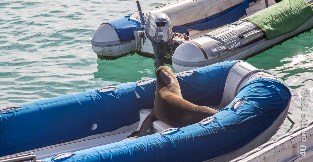 Seelöwe schläft im Zodiac zur Illustration der Anreise nach Galápagos