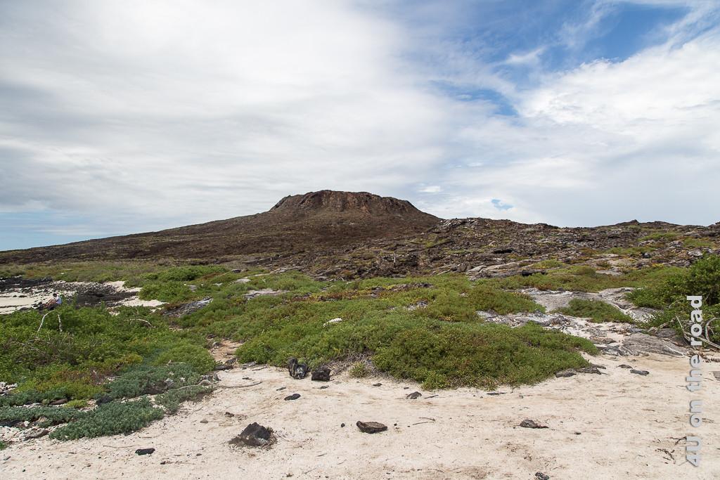 An Land der Insel Chinese Hut - Galápagos Inseln