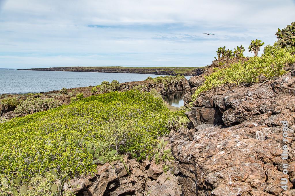 Auf dem Spaziergang entlang der Darwinbucht auf der Insel Genovesa - Galápagos Inseln