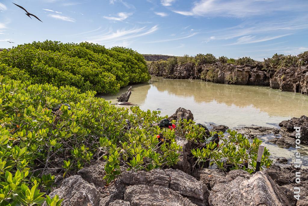 Lagune auf der Insel Genovesa - Galápagos Inseln