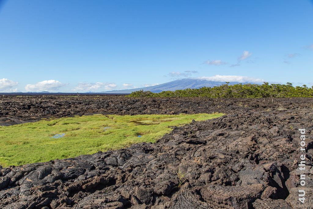 Brackwasser Lagune auf der Insel Isabella, Galápagos Inseln, Reisebericht Galápagos Kreuzfahrt