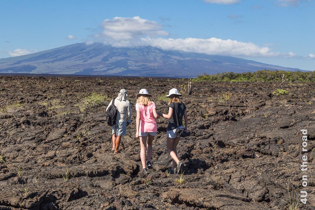 Punta Moreno, Insel Isabella, Galápagos Inseln