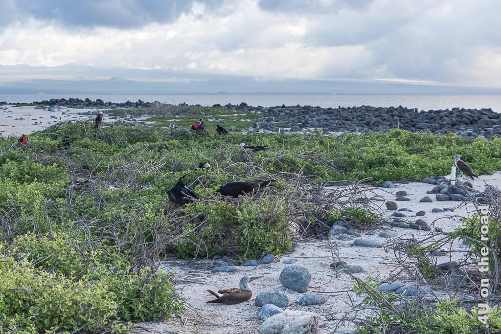 North Seymour gegen Abend - Galápagos Inseln