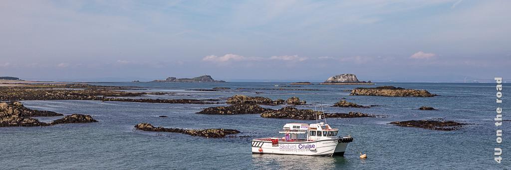 Seabird Cruise - mit diesem Schiff geht es zu den Vogelfelsen